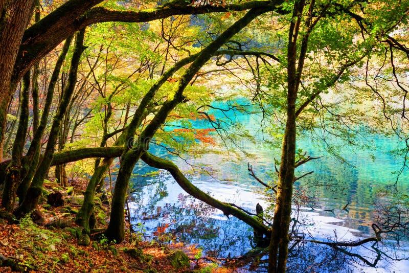 Vista escénica del lago azul y de los troncos de árbol cubiertos de musgo del bosque del otoño imagenes de archivo