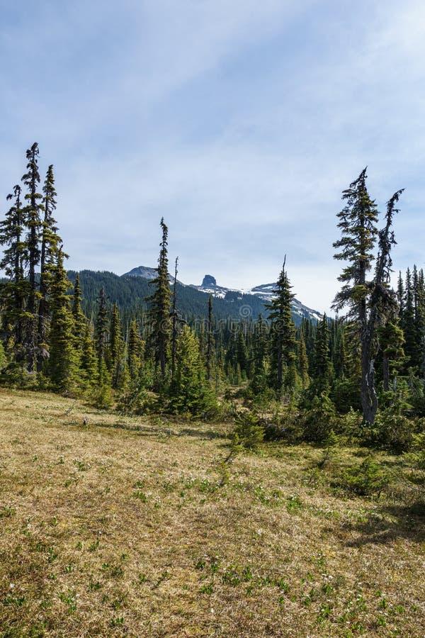 Vista escénica del medow verde con mañana negra distante del verano de la montaña del colmillo en el parque provincial Canadá del foto de archivo libre de regalías
