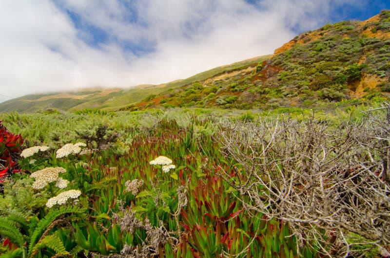 Vista escénica en la ruta 1 del estado de California imagen de archivo libre de regalías