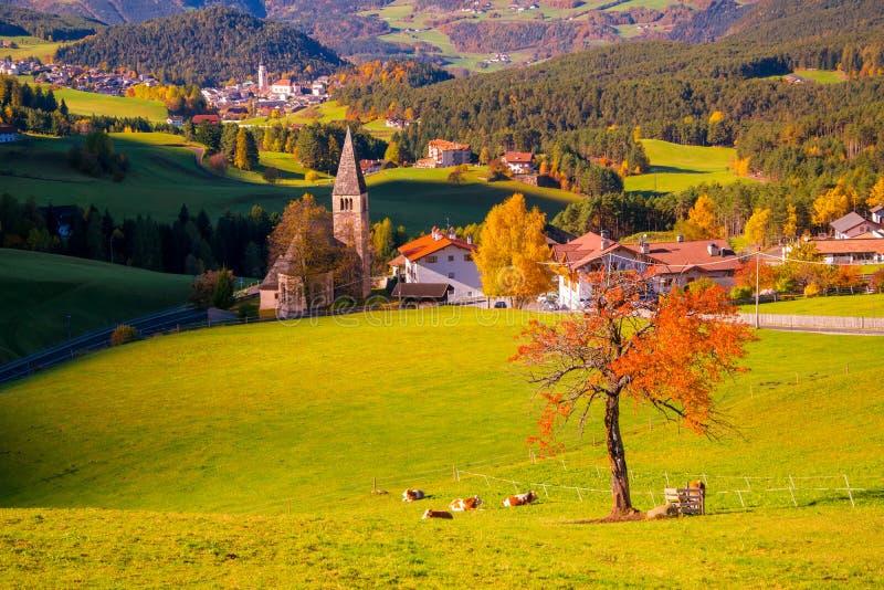 Vista escénica increíble del árbol solo rojo en valle de la montaña con los pueblos tradicionales del Tyrol en fondo imágenes de archivo libres de regalías