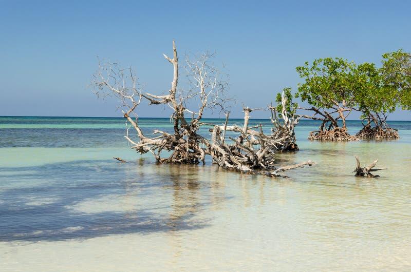Vista esotica della spiaggia immagine stock libera da diritti