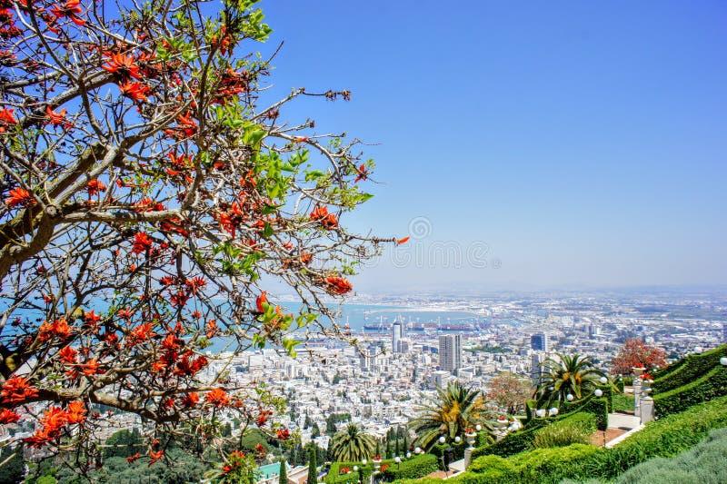 Vista espetacular em Haifa nos jardins do ` à do ¡ de Bahà foto de stock