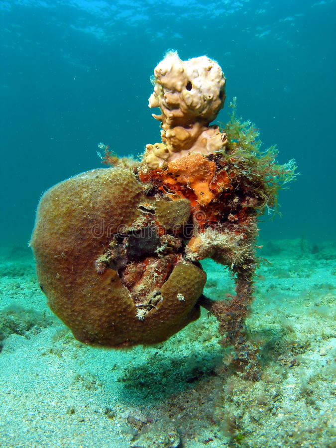 Vista estranha coral imagens de stock royalty free