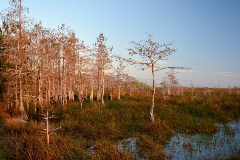 Vista Everglades στοκ εικόνα με δικαίωμα ελεύθερης χρήσης