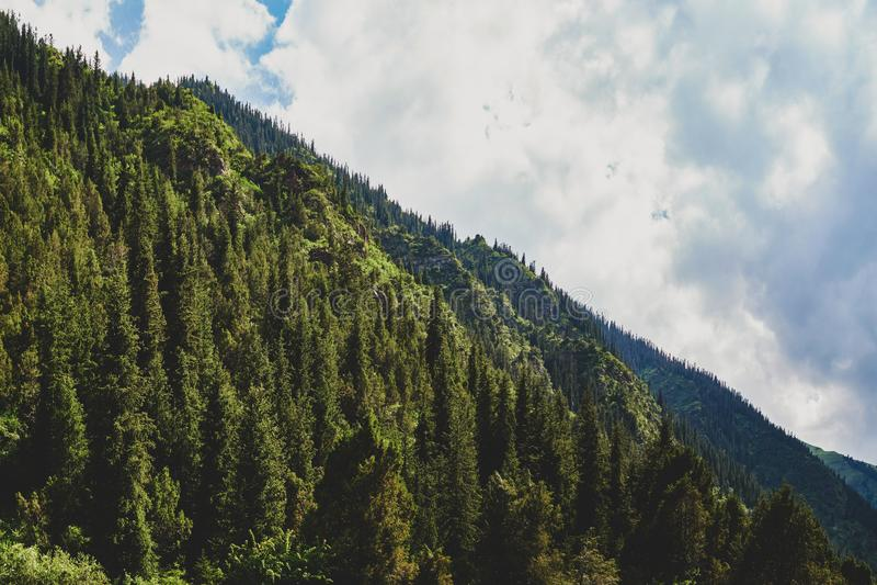 Vista fabulosa de las montañas, naturaleza que sorprende, verano en las montañas imágenes de archivo libres de regalías