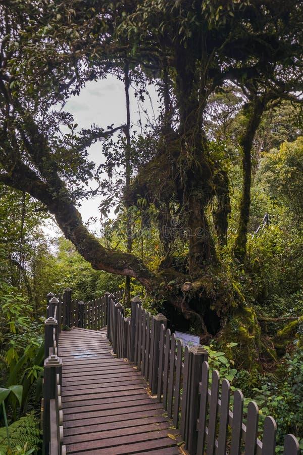 A vista fresca da passagem musgoso da floresta foto de stock