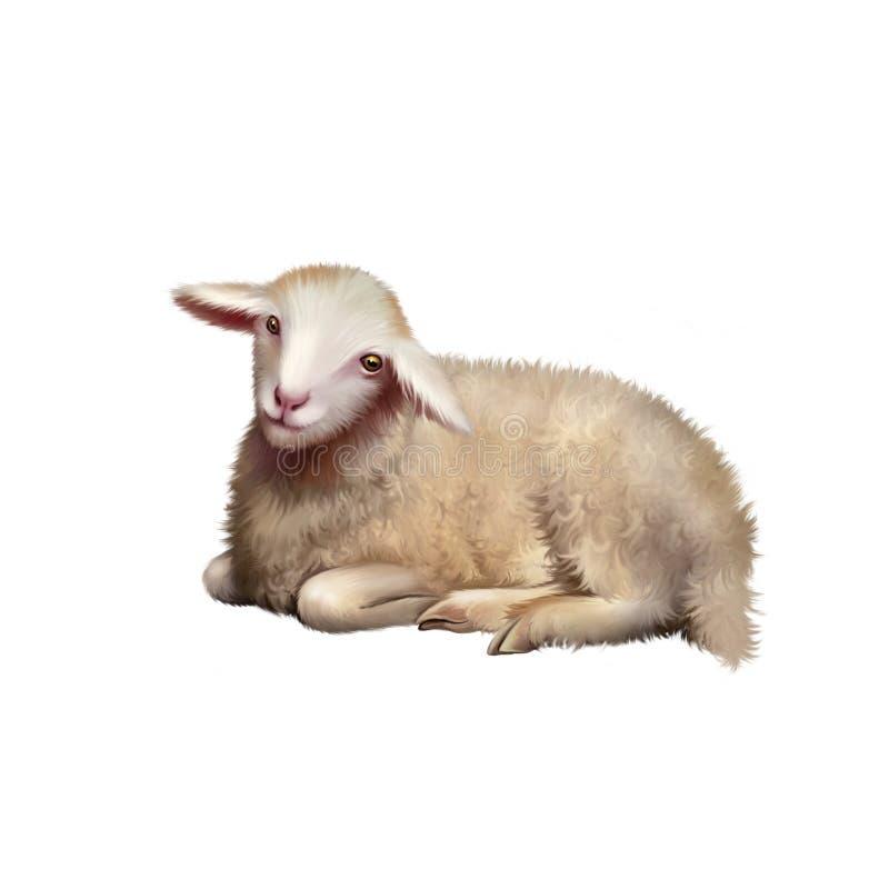 Vista frontale di stenditura delle pecore del bambino Agnello di riposo illustrazione di stock
