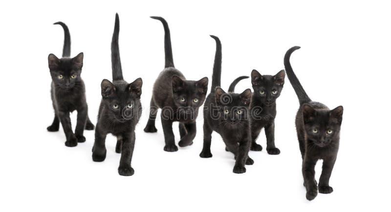 Vista frontale di un gruppo di gattino nero immagine stock libera da diritti