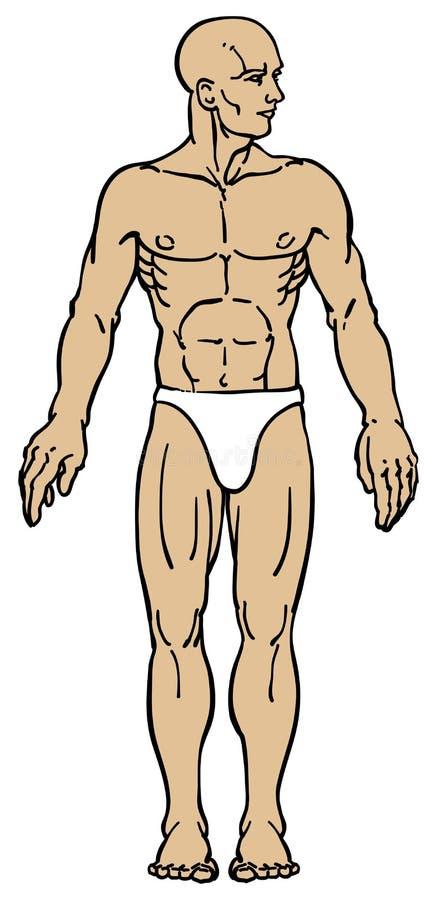 Vista frontale maschio umana illustrazione di stock