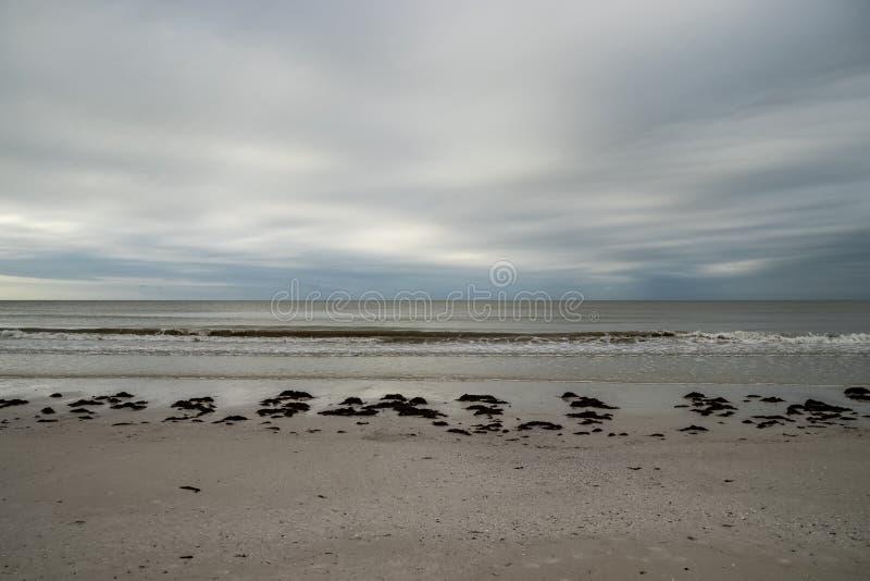 Vista fronte mare dei mucchi dell'alga e di orizzonte sulla mattina tempestosa lungo Myers Beach forte, Florida fotografia stock libera da diritti