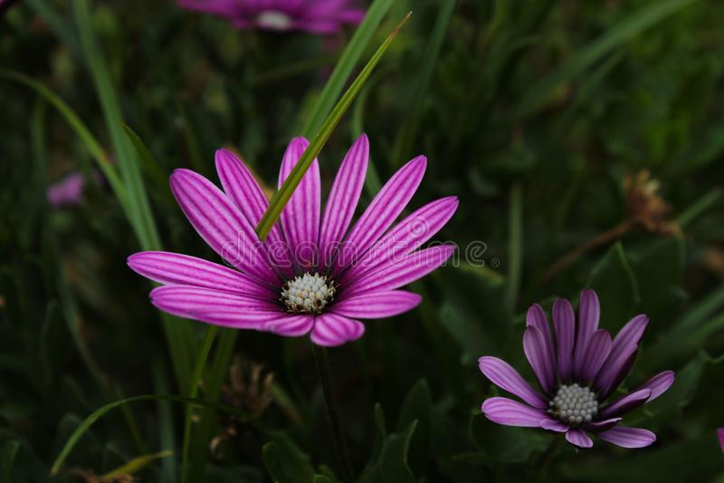 Vista general de la flor púrpura con alto contraste con el fondo fotografía de archivo libre de regalías