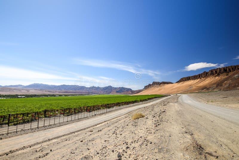 Vista granangular del camino de la grava al lado de un campo irrigado enorme de la uva y de las montañas del desierto en el lado  fotos de archivo