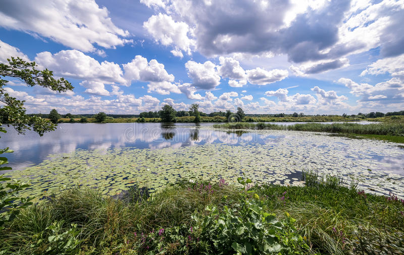 Vista grandangolare di una palude di estate e delle riflessioni della nuvola in acqua fra le ninfee gialle immagini stock