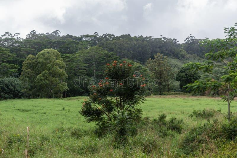 Vista hermoso en el área de Kuilau Ridge, Lihue-Koloa Forest Reserve de la selva tropical en Kauai, Hawaii, después de un tempora foto de archivo