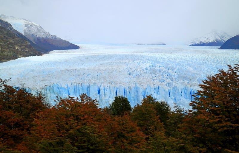 Vista impresionante del follaje de otoño contra Perito Moreno Glacier en el parque nacional del Los Glaciares, EL Calafate, Patag fotos de archivo