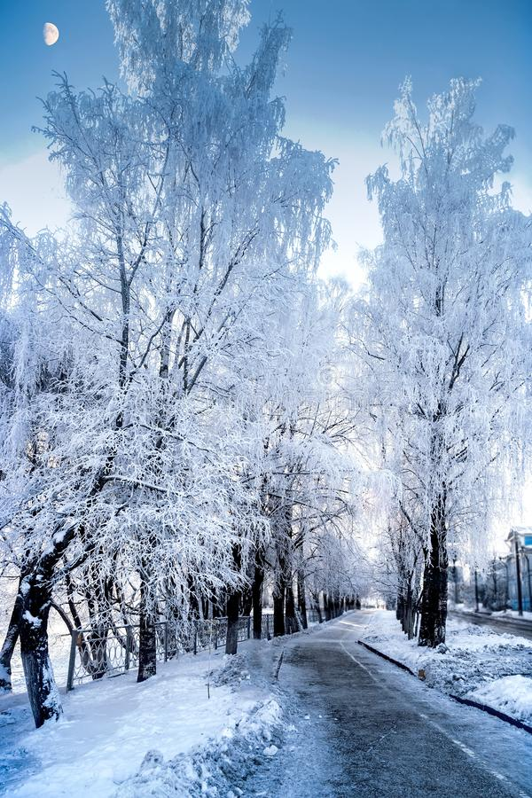 Vista increíble de árboles nevosos en un día escarchado del invierno foto de archivo libre de regalías