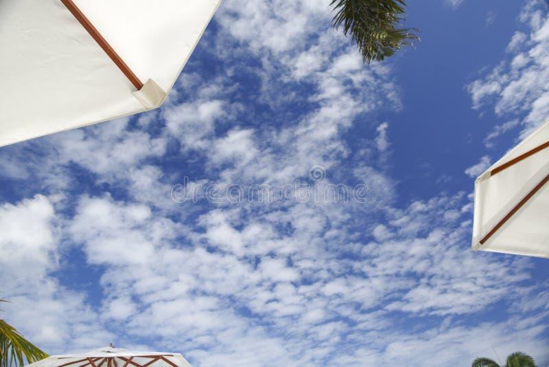 Vista inferior do céu, das nuvens, das palmeiras e do guarda-chuva foto de stock royalty free