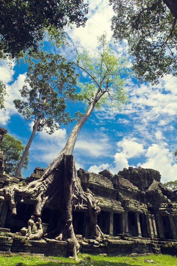 Vista interior del templo del som de TA. Angkor Wat foto de archivo