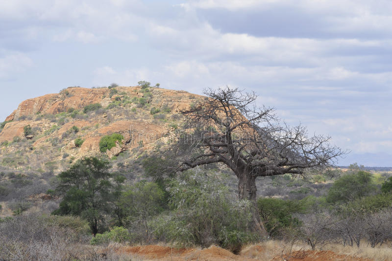 Vista Kenya África fotos de stock royalty free