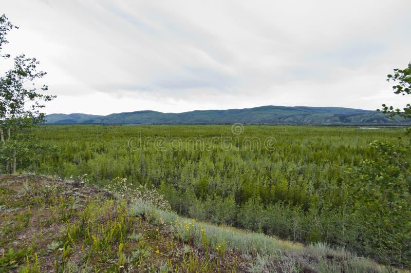 Vista larga do vale no Rio Yukon imagens de stock