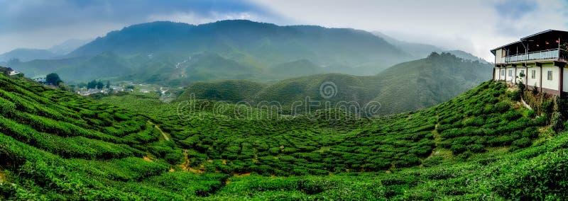 Vista larga a plantação de chá bonita em Cameron Highland, Malásia Curva e inclinação do monte com névoa, céu nebuloso foto de stock royalty free