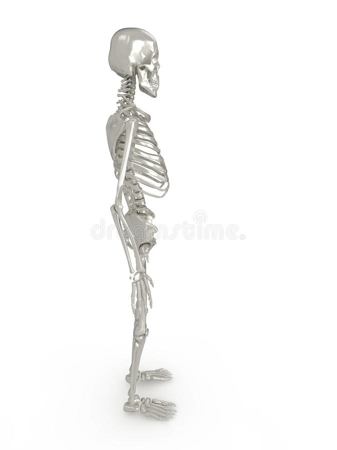 Vista lateral de esqueleto ilustração royalty free