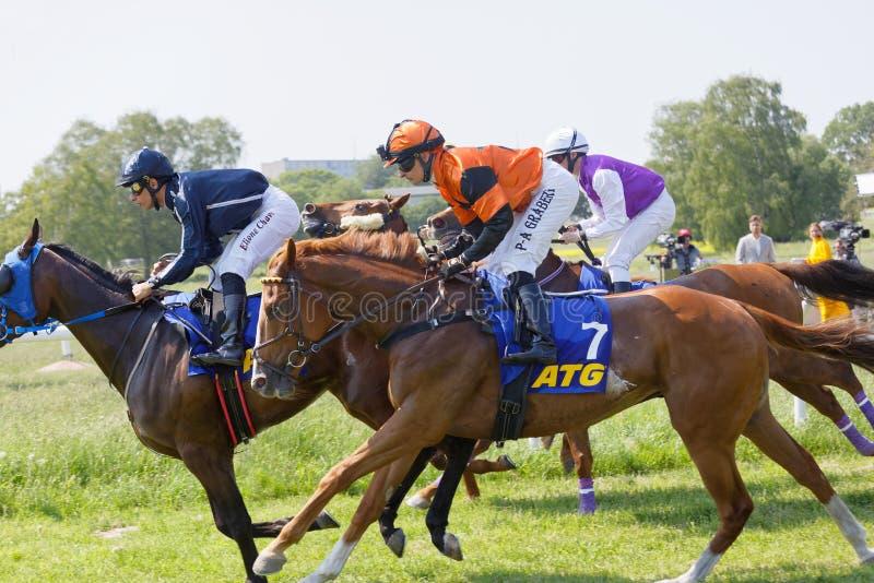Vista lateral de los jinetes coloridos que montan los caballos de raza árabes, audiencia en el fondo fotos de archivo