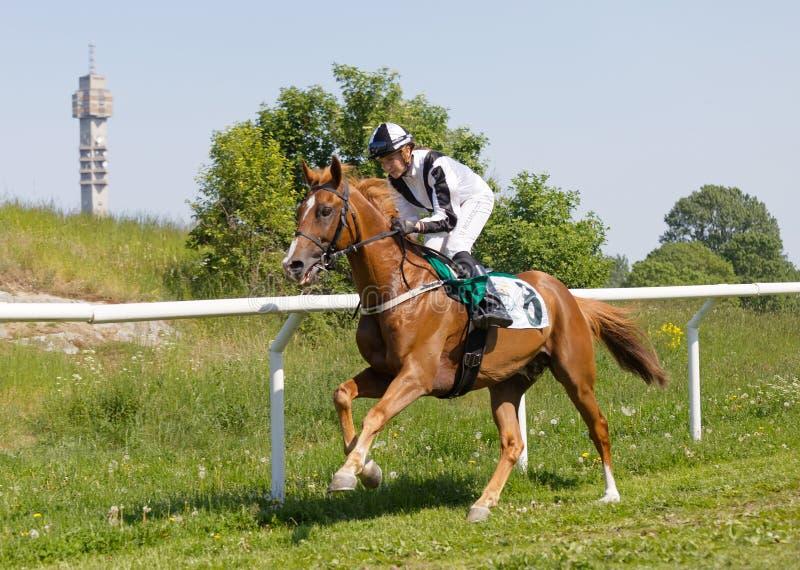 Vista lateral de un jinete que monta un caballo de raza árabe en el circuito de carreras, árboles en el fondo imágenes de archivo libres de regalías