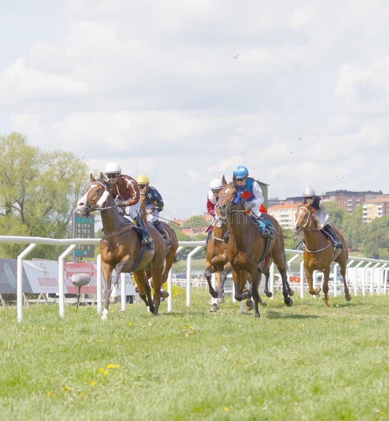 Vista lateral de una carrera dura entre los jinetes que montan en caballos de raza foto de archivo