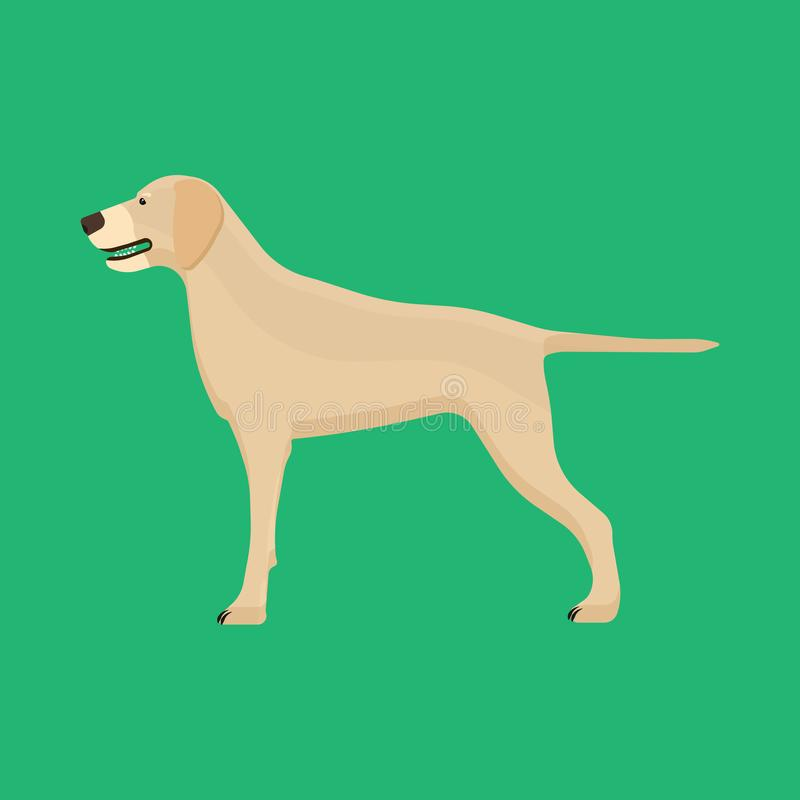 Vista lateral del animal doméstico de Labrador del perro del icono animal del vector Amigo feliz aislado de la historieta linda d libre illustration