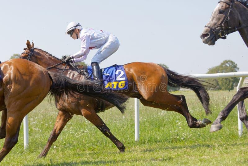 Vista lateral del jinete Ulrika Holmquist que monta un caballo de raza árabe del galope fotos de archivo