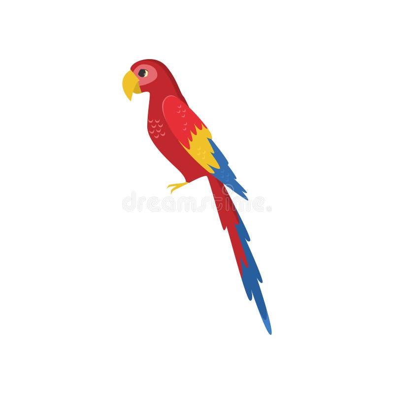 Vista lateral del loro rojo grande del macaw aislada en el fondo blanco libre illustration