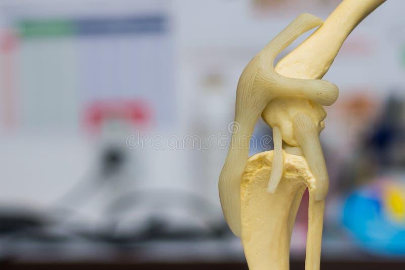 Vista lateral del molde de la rodilla del perro y fondo borroso fotografía de archivo
