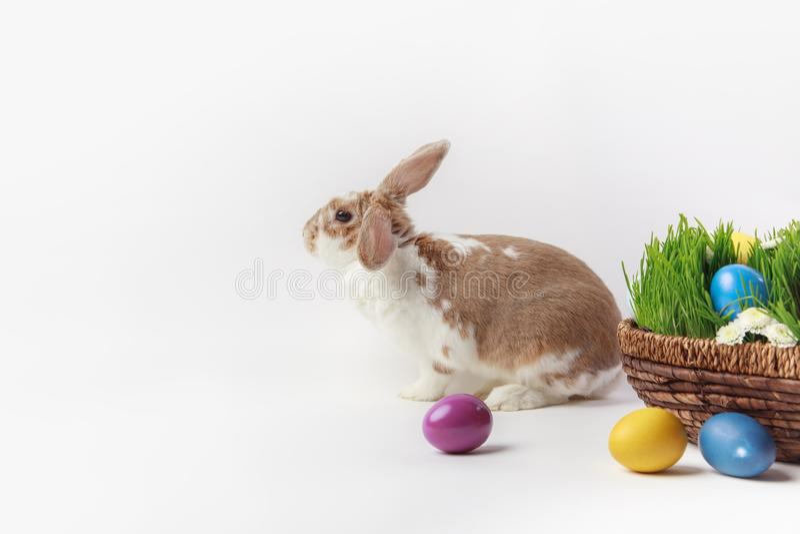 Vista lateral do coelho perto da cesta de easter com grama e ovos fotografia de stock