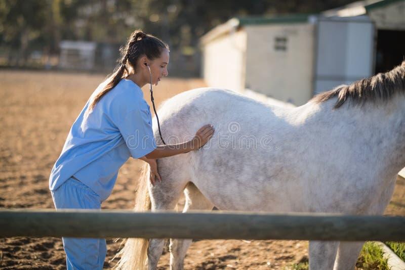 Vista laterale del cavallo d'esame del veterinario femminile con lo stetoscopio fotografie stock libere da diritti