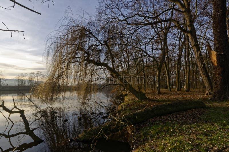 Vista laterale del ceppo di albero caduta in fiume immagini stock