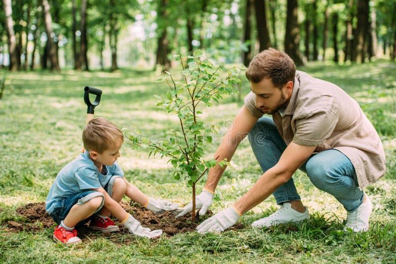 vista laterale del padre e del figlio che piantano albero fotografia stock