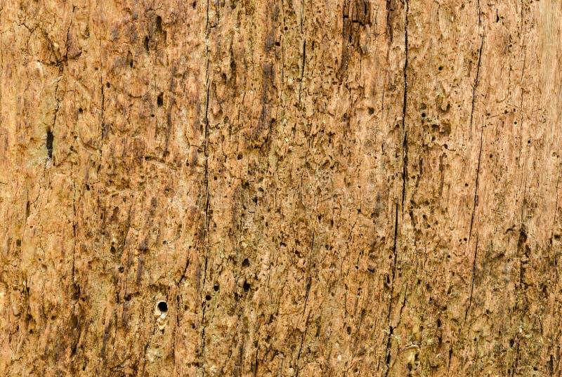 Vista laterale di vecchia struttura di legno fotografia stock libera da diritti