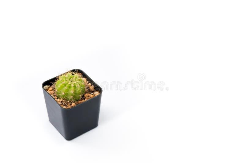 Vista laterale isolata del cactus del cerchio nel vaso dell'albero del cubo fotografie stock libere da diritti