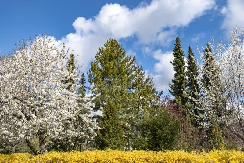 Vista a los arbustos y a los árboles florecientes en un jardín en Berlín en un día de primavera brillante fotografía de archivo