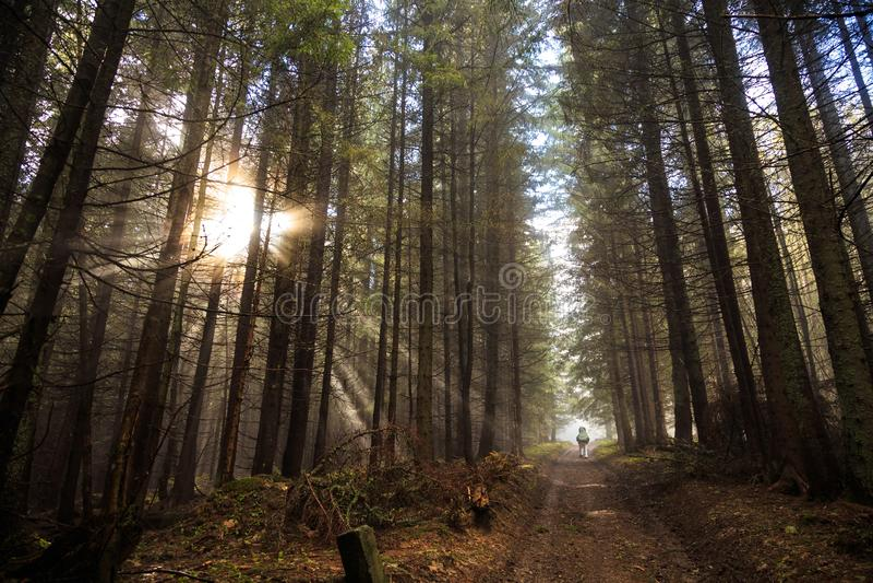Vista m?gica del bosque c?rpato fotografía de archivo libre de regalías