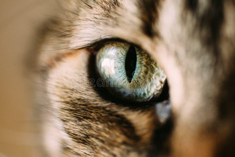 Vista macra del ojo de los catVista ascendente cercana del ojo de gato verde y azul fotografía de archivo libre de regalías