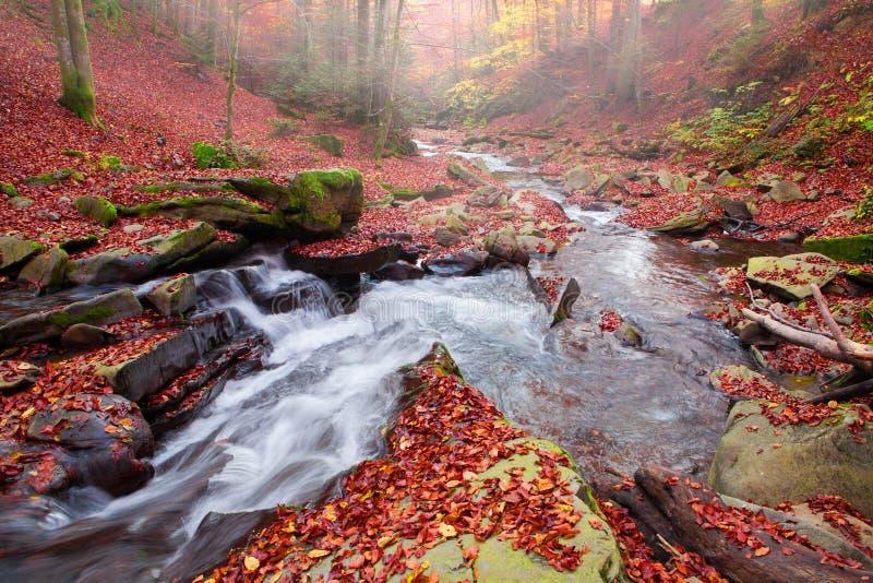 Vista magnífica da cachoeira em Autumn Beech Forest dentro imagem de stock