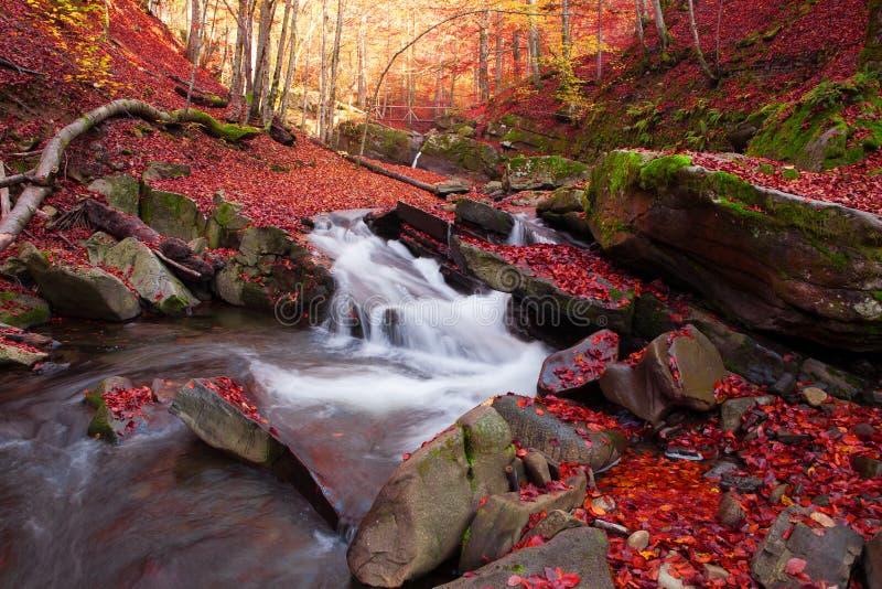Vista magnífica da cachoeira em Autumn Beech Forest dentro fotografia de stock