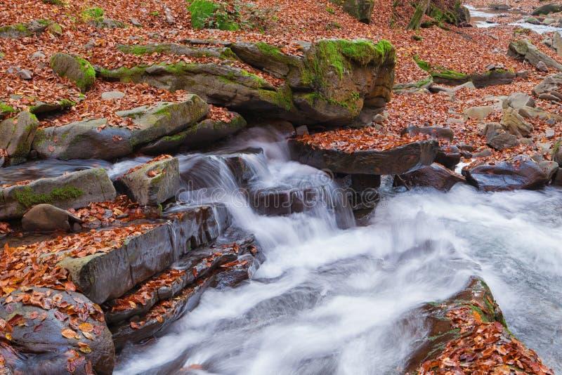 Vista magnífica da cachoeira em Autumn Beech Forest dentro imagem de stock royalty free