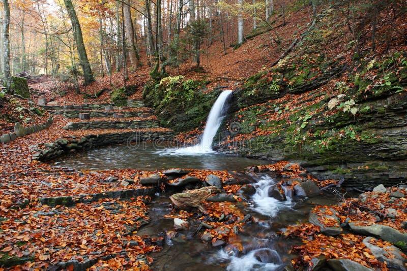 Vista magnífica da cachoeira em Autumn Beech Forest dentro foto de stock royalty free
