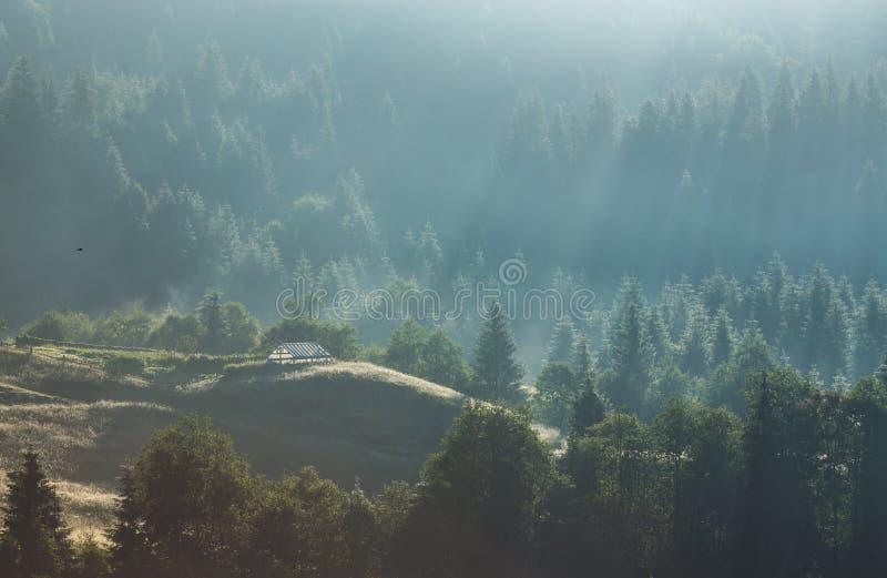 Vista majestosa das madeiras que incandescem pela luz solar no crepúsculo Cena dramática e pitoresca da manhã fotos de stock royalty free