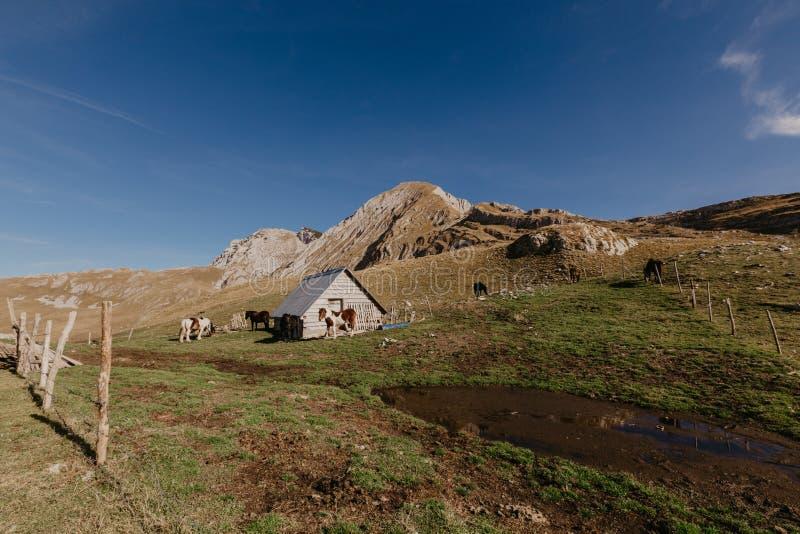 Vista meravigliosa alle montagne nel parco nazionale Durmitor nel Montenegro, Balcani europa Carpatico, Ucraina, Europa - Immagin fotografia stock libera da diritti