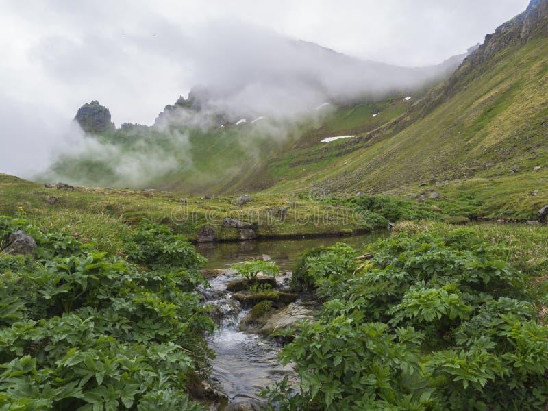 Vista misteriosa su bei re e scogliere della regina Hornbjarg in fiordi ad ovest, riserva naturale a distanza Hornstrandir in Isl fotografia stock