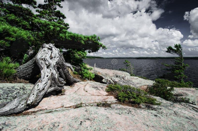 Vista na baía Georgian, costa do granito do Lago Huron com a árvore seca velha foto de stock